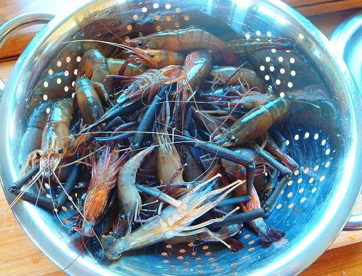 Fresh water prawns from our creek.