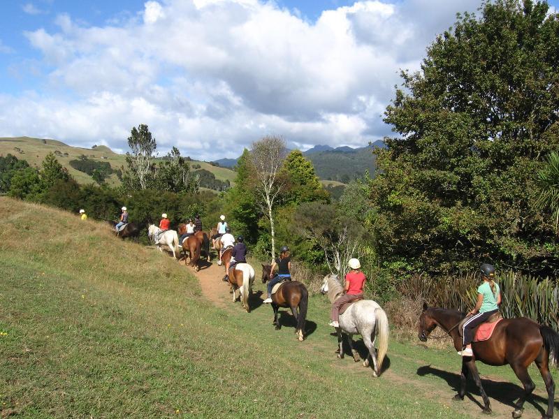 Caballo y paseos en pony en la granja adyacente.