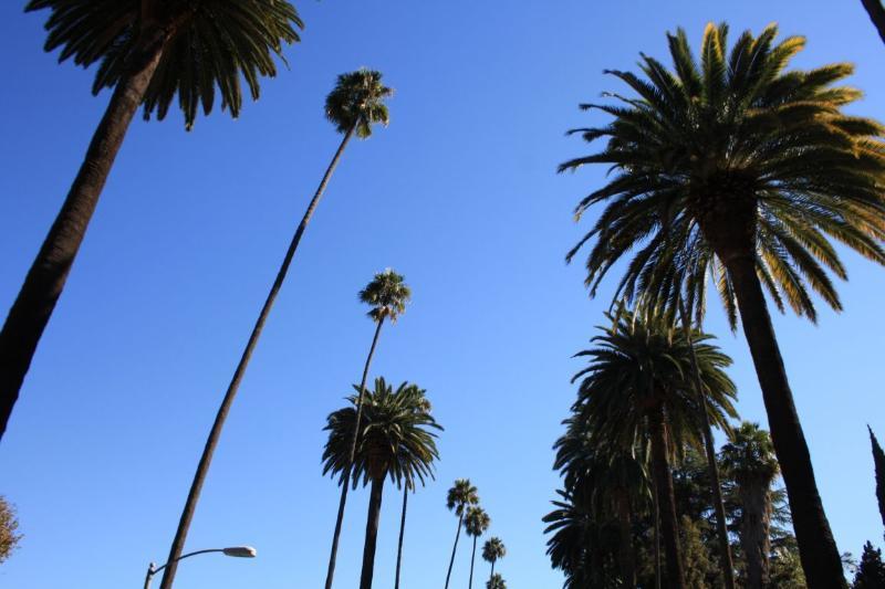 Walk in Beverly Hills!