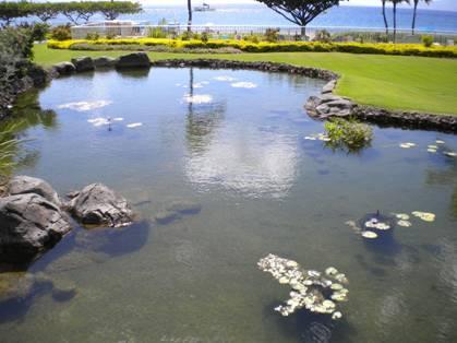 Oceanfront Koi Pond at The Whaler on Kaanapali Beach Vacation Rental, Lahaina, Maui