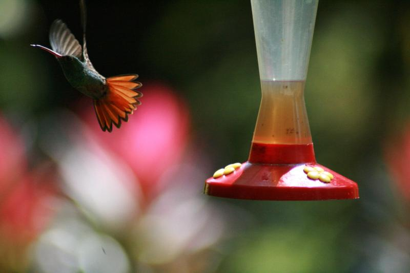 You'll see lots of hummingbirds from the patio.