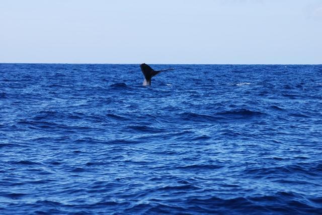 COME ENJOY OUR OCEAN