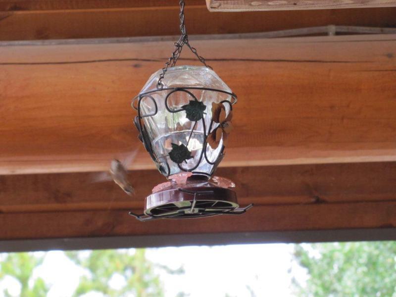 Experience an abundance of Hummingbirds