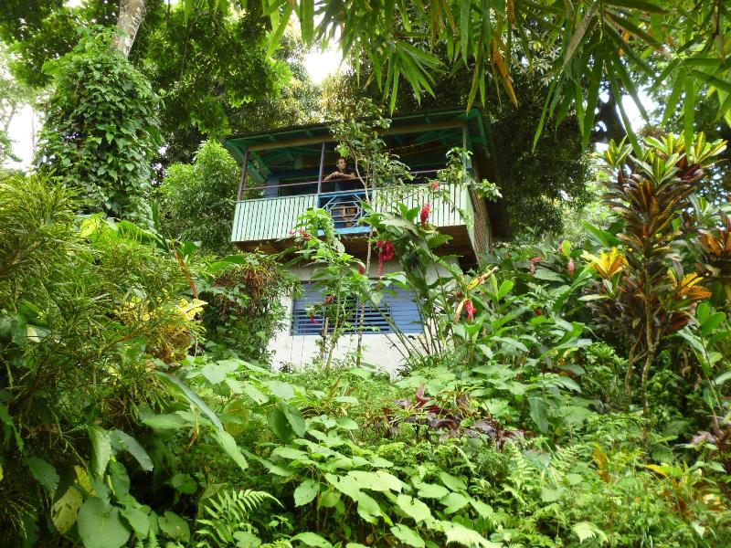 mango ridge backpackers retreat, holiday rental in Port Antonio