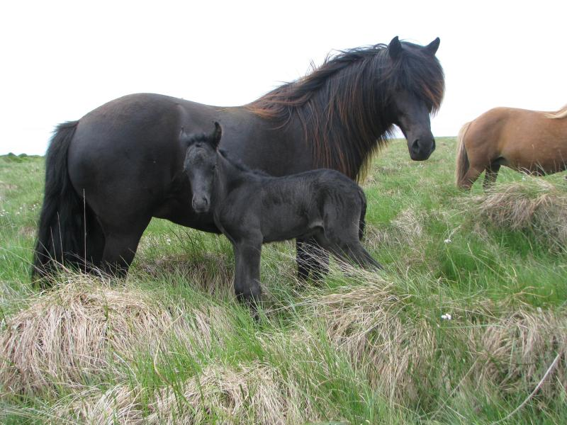 My favorite breeding mare with one of her ofsprings :)