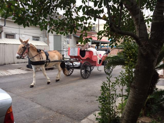 Mule Carriage Route to Jackson Square