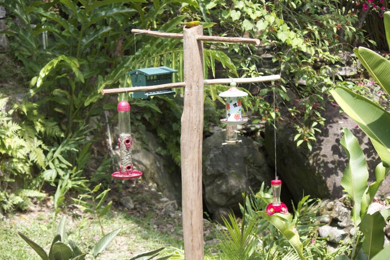 Estación de alimentación del pájaro