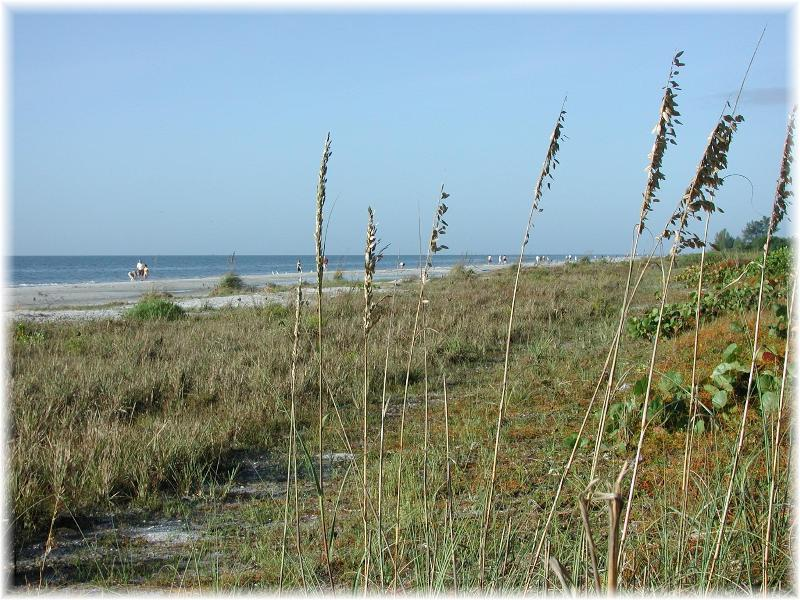 Looking west through the sea oats.