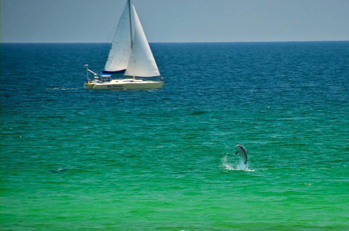 Our beautiful Gulf
