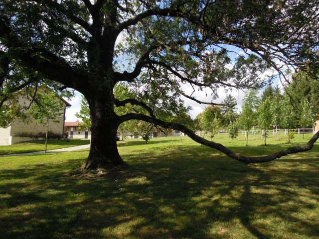 Children playground / Picnic corner bis /  Ash tree illimunated in the evening