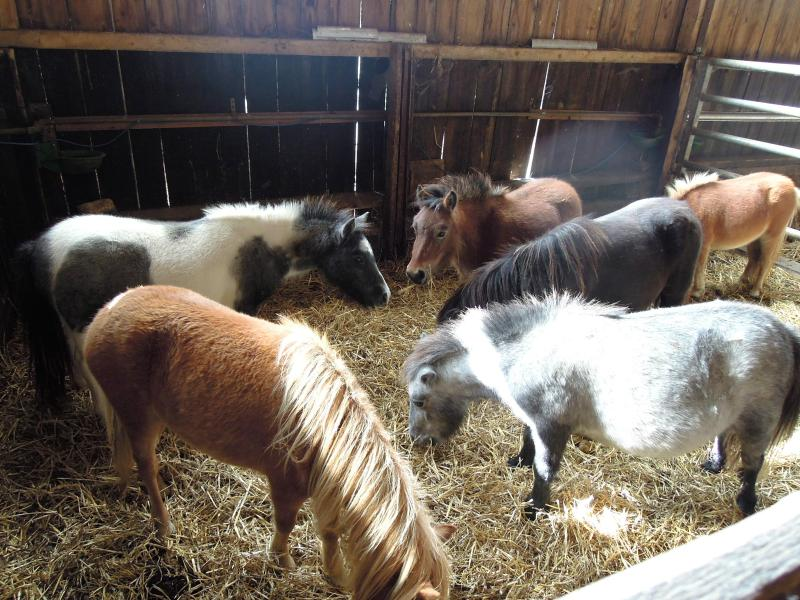 Horseriding in Villers: Poney club with children farm / free access