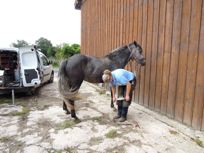 Horse riding in Villers: the poneyclub with blacksmith at work : free access