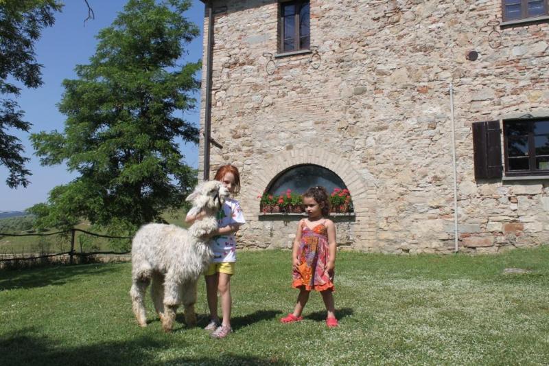 Casa Archi at Maridiana Alpaca, vacation rental in Trestina