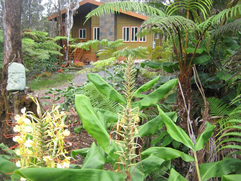 Exterior cottage in jungle