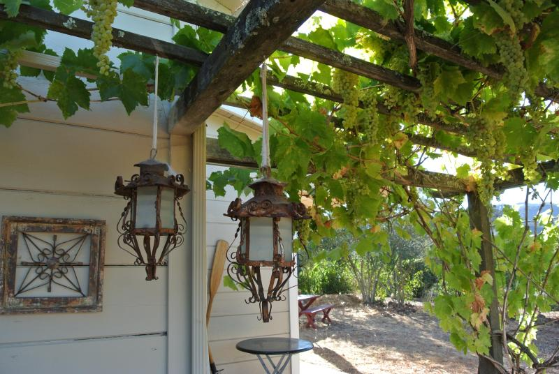 Go ahead, taste our organic grapes hanging overhead.
