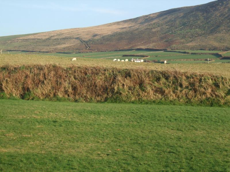 Mountain View from back garden. Fields beyond with sheep grazing...tranquility!
