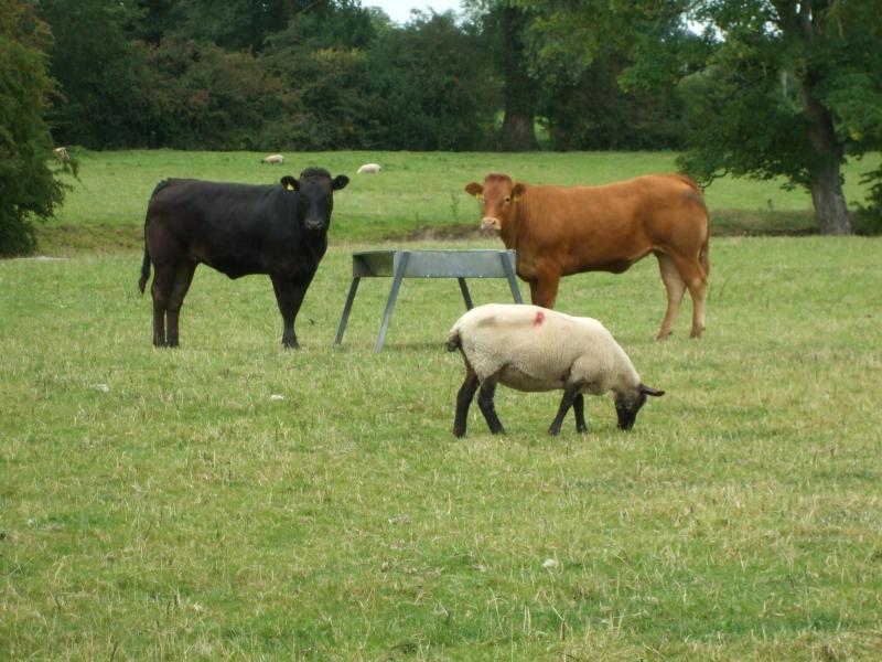 Vistas de los animales de la granja