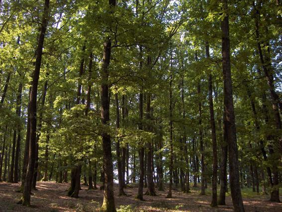 forêt à proximité