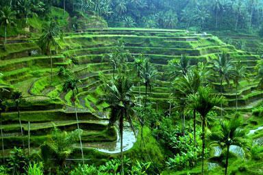Espectaculares vistas del campo de arroz son comunes alrededor de la villa