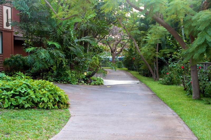 senderos tropicales a las unidades