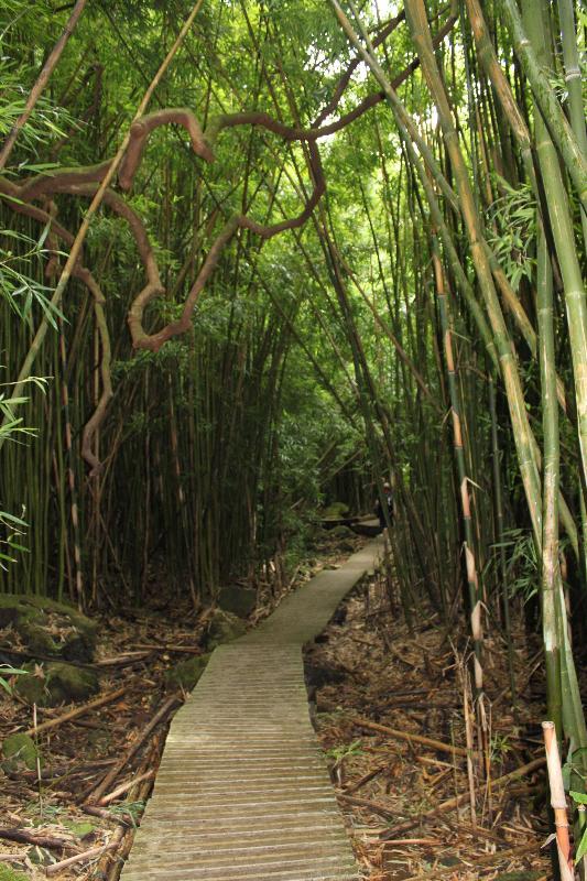 Bamboo trail- Hana- behind 7 pools