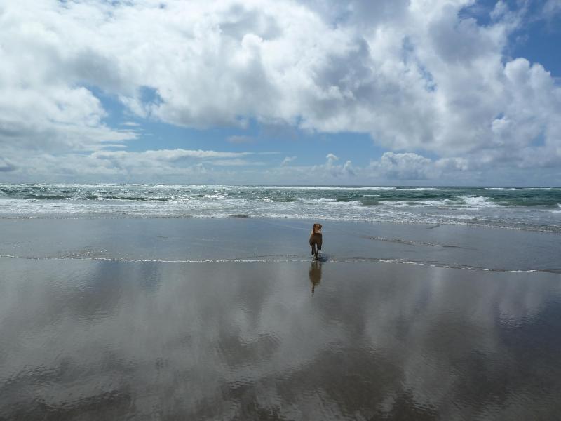 Ocean Floor Project