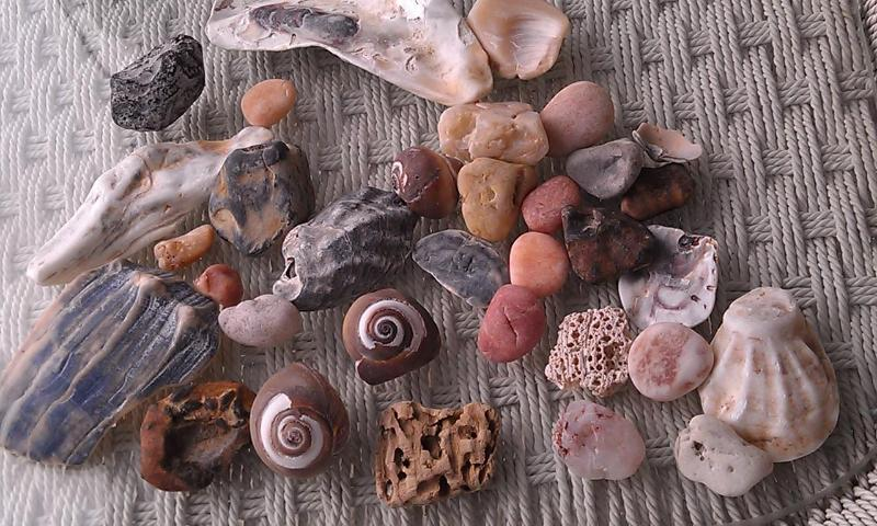 Treasures from the Sea!!!