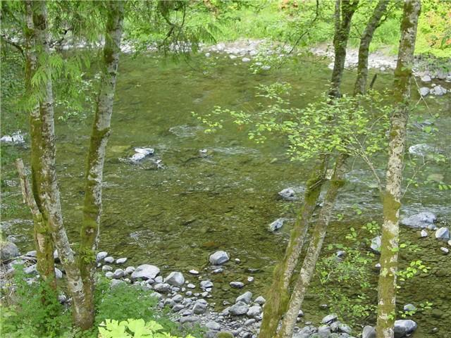 Sol Duc River behind the cabin