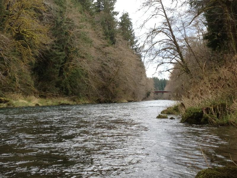Sol Duc River - Famous for salmon and steelhead fishing! (picture just behind the house)
