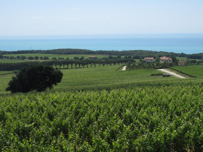 Visit a Bolgheri Vineyard