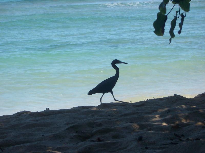 Une grue sortir pour une promenade matinale sur la plage.