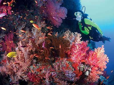 World Class Scuba Diving with free shuttle to nearby Dive Shop and Marina (file photo)