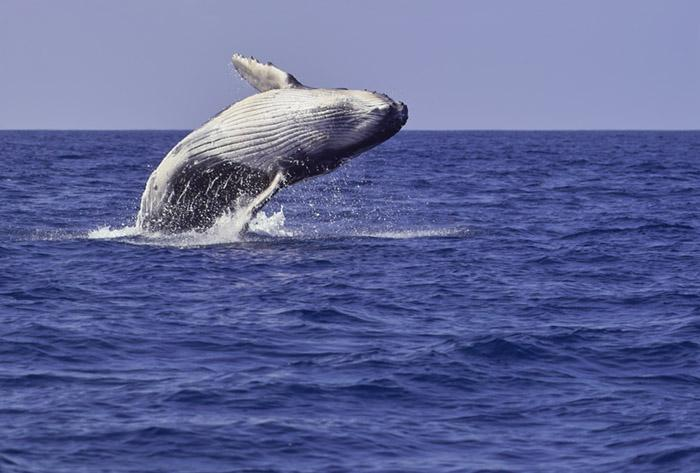 Rent a boat for dolphin and whale watching--our guests get discounts