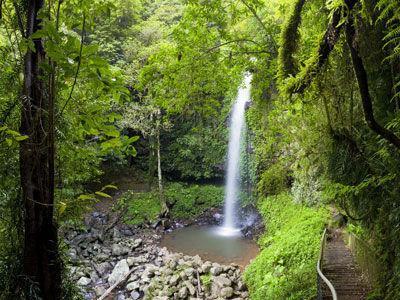 Dorrigo World Heritage National Park just a 15 minute drive