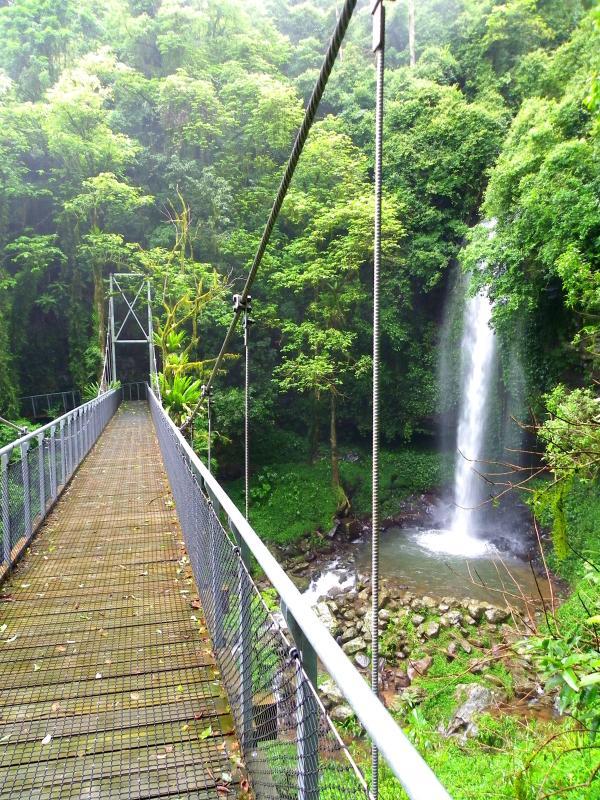 Crystal Shower Falls - a 15 min drive then a 20 minute rainforest walk