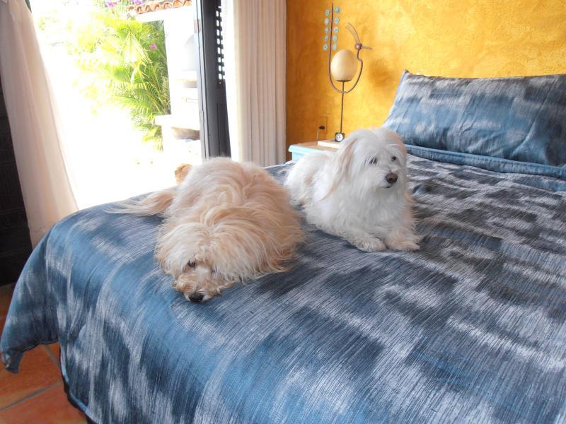 K.C. & Sparky amor Casa Owaissa