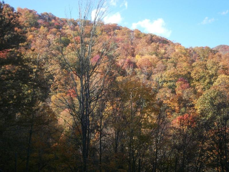 View during Fall Foliage
