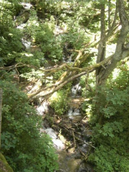 Rushing stream nearby