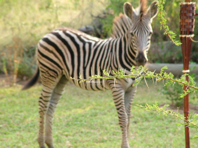 You will see plenty of visitors in the garden to give you a real safari bush experience