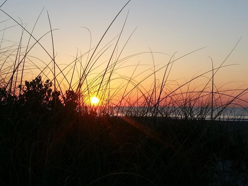 Sunrise door het Duin gras op strand in de buurt van de condo