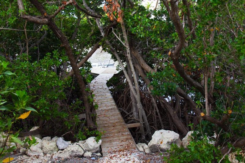 Mangrove baldakijn wandeling naar Dock