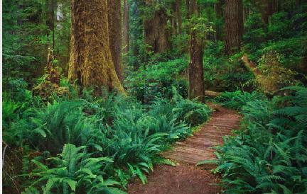 Redwood State National Park