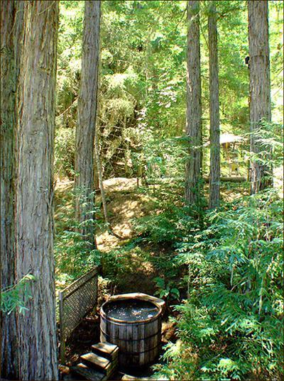 The hot tub in its circle of redwoods