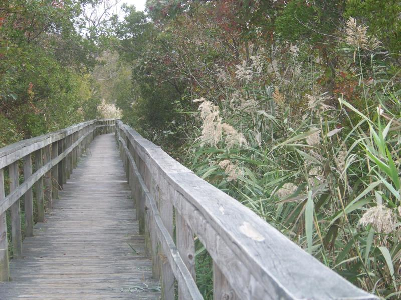 Boardwalk through our wetland area is part of the Nature Trail along the Sound.  Great Nature Trail.