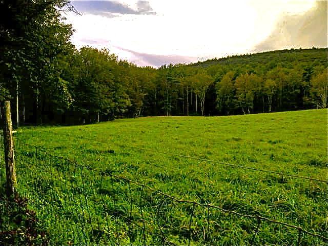 meadow next door