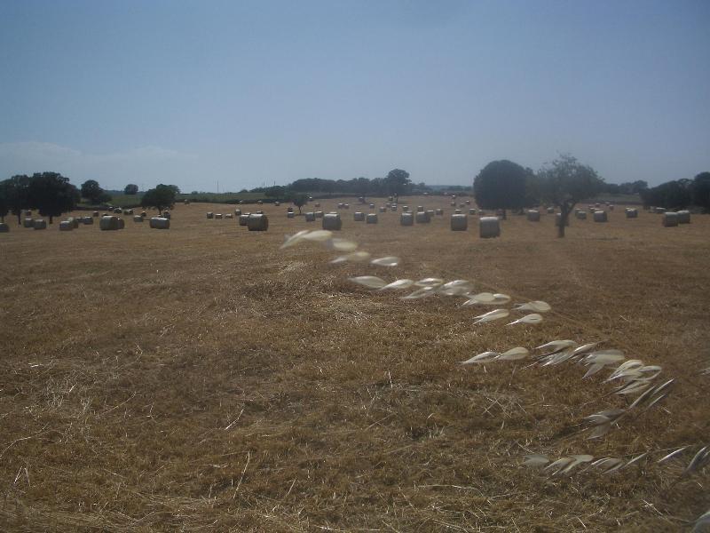 Countryside near Conversano