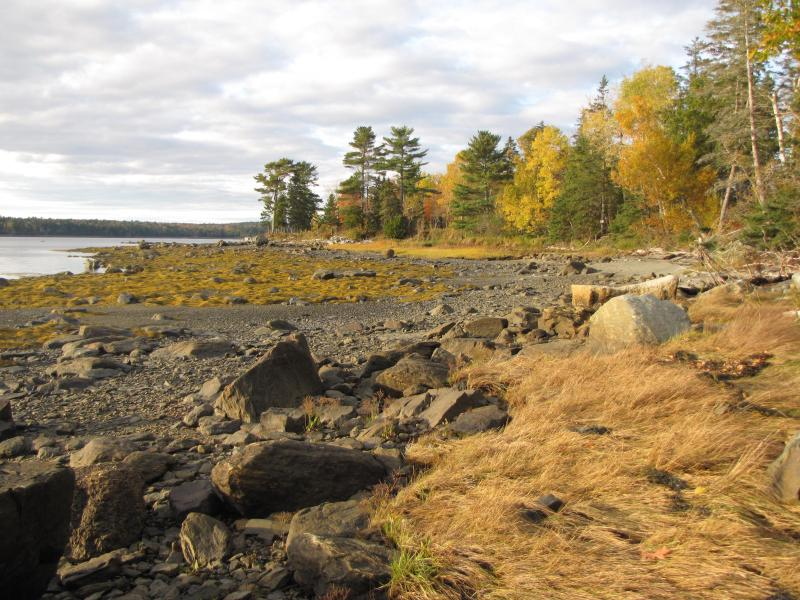 Low Tide in Front of the House Looking North - early fall.