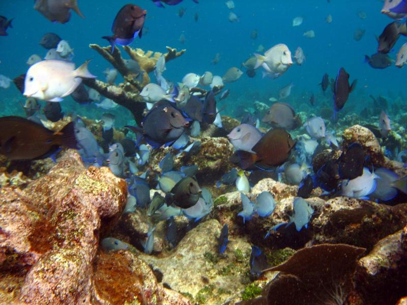 The barrier reef in our area is arguably the finest snorkeling site in the Mahahual region.