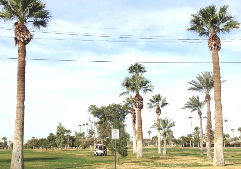 There are three beautiful public golf courses near my house with prices as low as $9 per 9 holes.