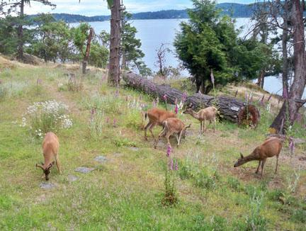 Deer on trail to shore